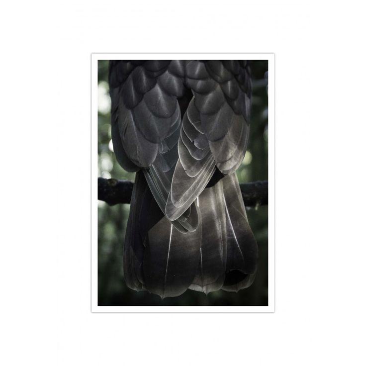 Kaka...New Zealand native bird photographic print. lisa-day.com