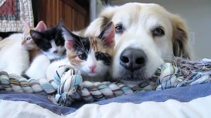 L'irresistibile reazione del cucciolo di cane per la suoneria del cellulare - La Stampa