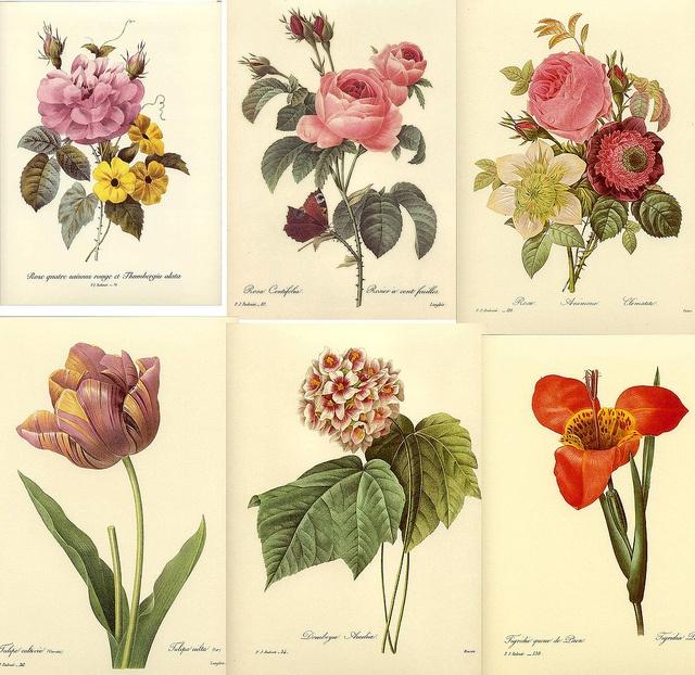 Free To Use Vintage Botanical/flower Prints