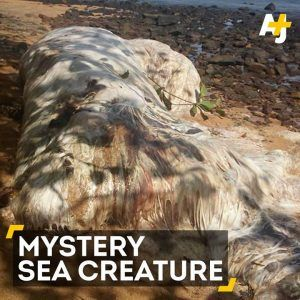 This mysterious sea creature washed ashore in the Philippines and nobody knew what it was. #news #alternativenews
