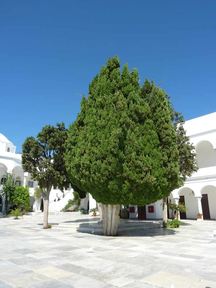 Wonderful trees at the Holy Church of Panagia Evaggelistria of Tinos, Greece