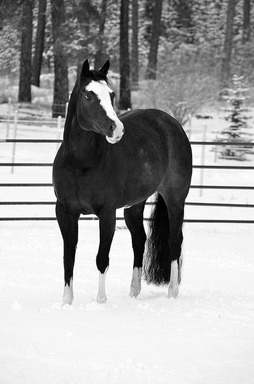 ♥~ Black and White Winter ~♥                                #horses