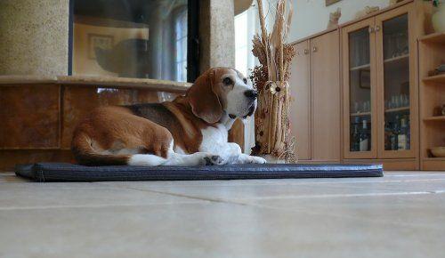 Aus der Kategorie Betten  gibt es, zum Preis von EUR 30,90  Hundematte BORIS Wir bieten Ihnen die abgebildeten Hundebetten in 3 Größen und in verschiedenen Farben an. Das Hundebett ist aus Kunstleder Das Bett ist robust & bequem - sehr gut für alle Hunde. BORIS M (70 x 90cm) für mittlere Hunderassen - bis ca.45cm, Cocker Spaniel, Beagle, Whippet, Mittelpudel , Bullterrier BORIS L (90 x 120cm) für große Hunderassen - bis ca.55cm Border Collie, Labrador u. Golden Retriever, English Setter…