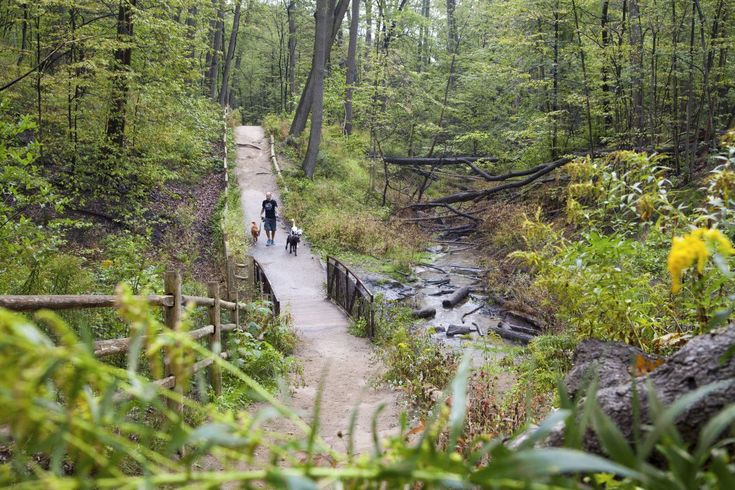 Glen Stewart Park - Explore the City: Hidden Nature Gems in Toronto - Whether you are new to Toronto or just looking for some city treasures, here are the amazing hidden gems great for hiking, biking, and connecting with nature itself.