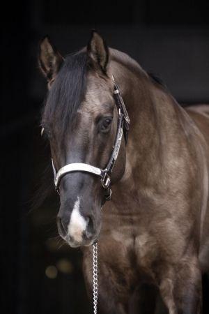 General Jac O Lena - Stallion Directory