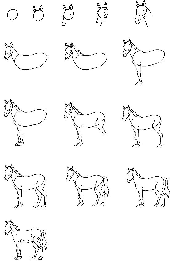 How to draw a horse step by step easy for kids - photo#5