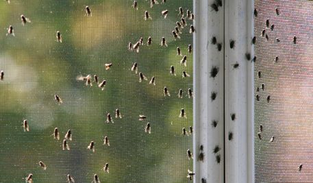 termite control Charleston >> pest control Charleston --> http://currypestcontrol.com/
