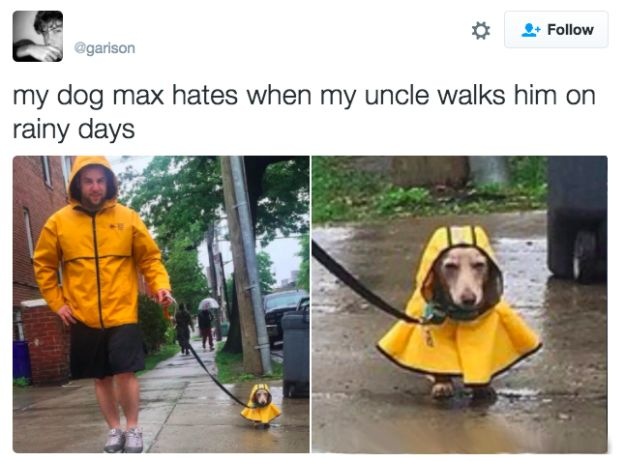 And this one simply trying to avoid the rain.   21 Pictures That Prove Dogs Are Actually Completely Perfect