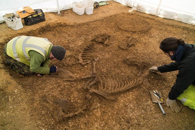 Iron Age chariot and horses unearthed at Yorkshire building site.   Archaeologists work on the horse and chariot remains. The find is the first of its kind in the last 200 years and one   of only 26 ever excavated in the UK. It has been described as a find of 'international significance'  [Credit: David Wilson Homes]