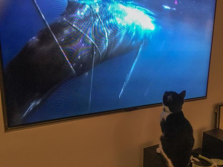 When you get home and find your cat heavily involved in nature documentaries. https://www.facebook.com/dcbpets. Dr. Chris  Brown