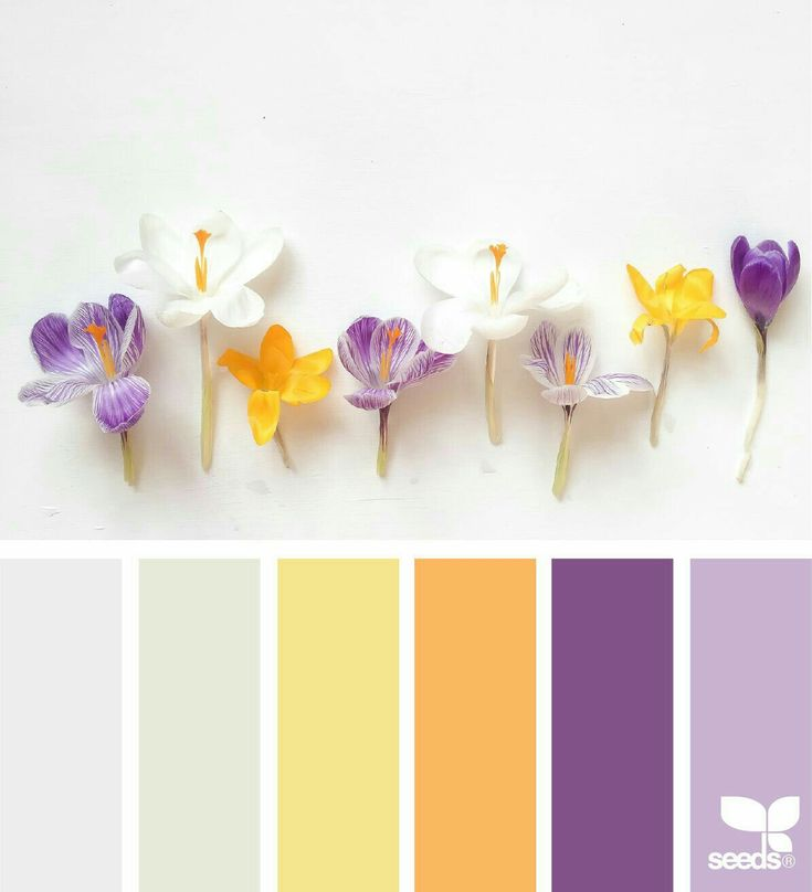 For Sunday it's 2 purples, a sunshine orange, pale yellow and 2 light shades sorta greys? X