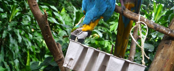 One of the birds figuring out how to access the food hidden in its enrichment!