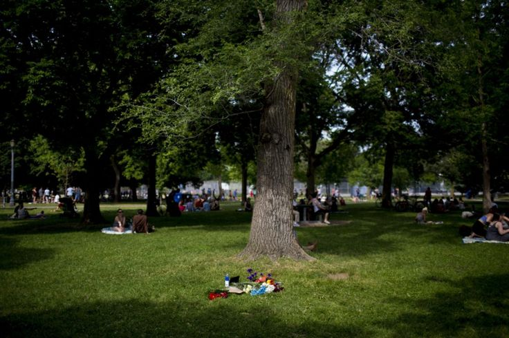 A small memorial is seen at the base of a tree where a man died after a branch fell on him while he was sitting with his pregnant wife in Trinity Bellwoods Park.