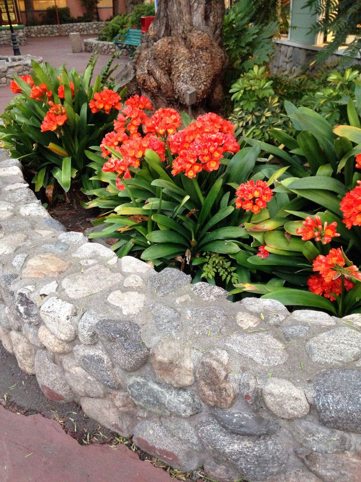 23 best images about flower bed ideas on pinterest for Best plants for flower beds