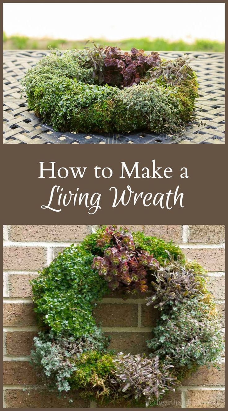 Learn how easy it is to make a really beautiful living wreath. Makes a great inexpensive gift, with just a few materials, in very little time.