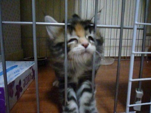 머리를 써서 문을 여는 고양이 | 유머 게시판 | 루리웹 모바일