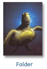 Adopt a sea turtle - Sea Turtle Conservancy