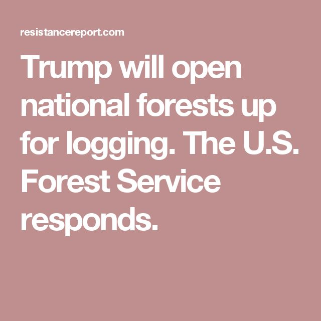 Trump will open national forests up for logging. The U.S. Forest Service responds.
