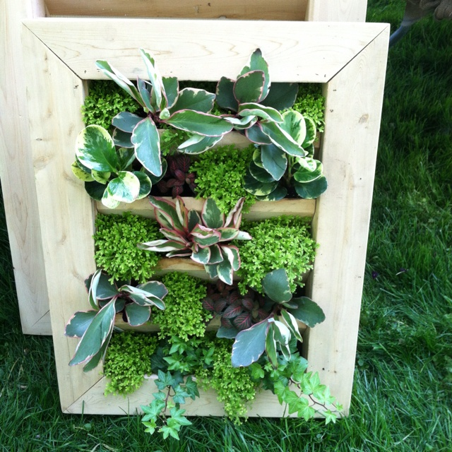 240 best 2014 garden zones images on pinterest