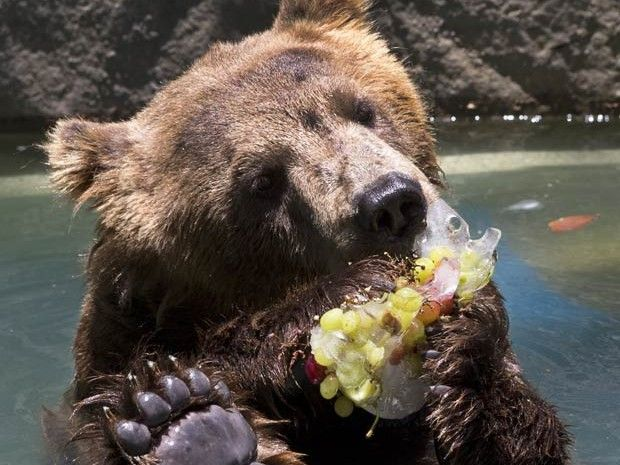With hot temperatures continuing in #Brazil, the zoo in Rio de Janeiro made special ice treats for the #animals so they can cool off! (Note: In Portuguese, so you'll have to use Google Translate.)