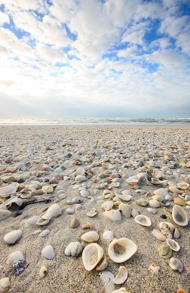 shells and shells and more shells...