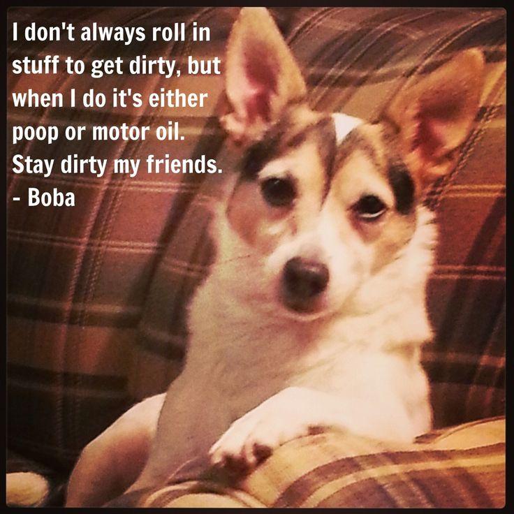 17 best images about dog shaming on pinterest my mom for Motor oil smelling poop