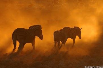 Sunset at the Okaukeujo waterhole, Etosha National Park, Namibia