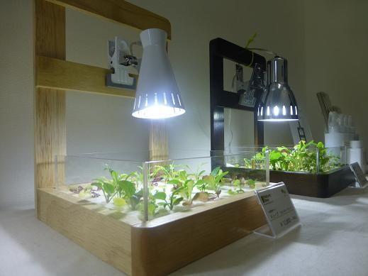 水耕栽培 照明 風呂場 - Google 検索