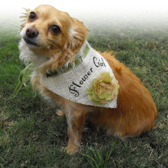 Pet Burlap Wedding Bandana for Dog Flower by AFurryTailWedding