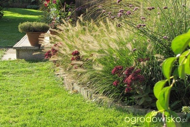 Pokażę nasz ogród - strona 300 - Forum ogrodnicze - Ogrodowisko