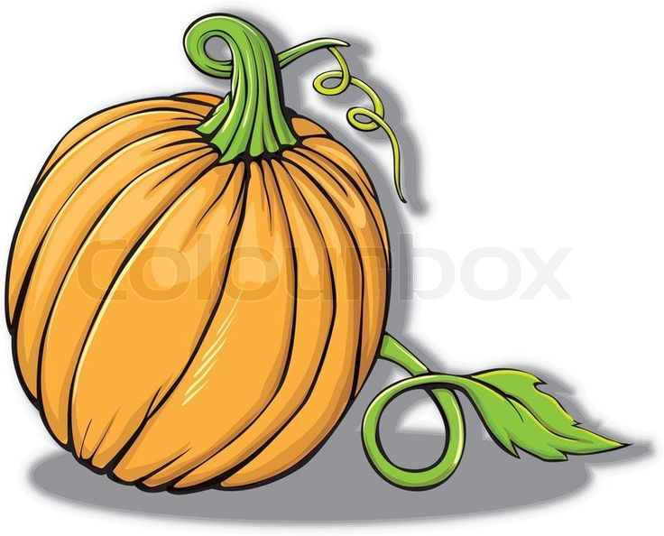 Pumpkin | Vector | Colourbox on Colourbox