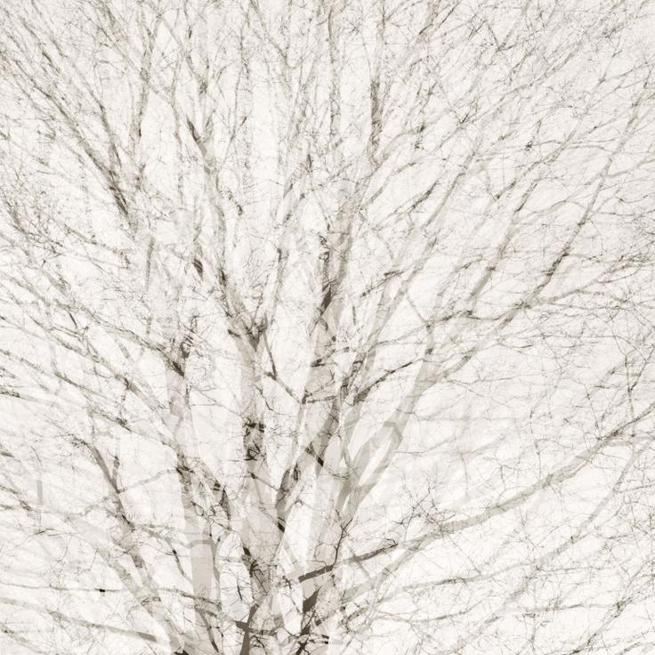 by ryan bush.
