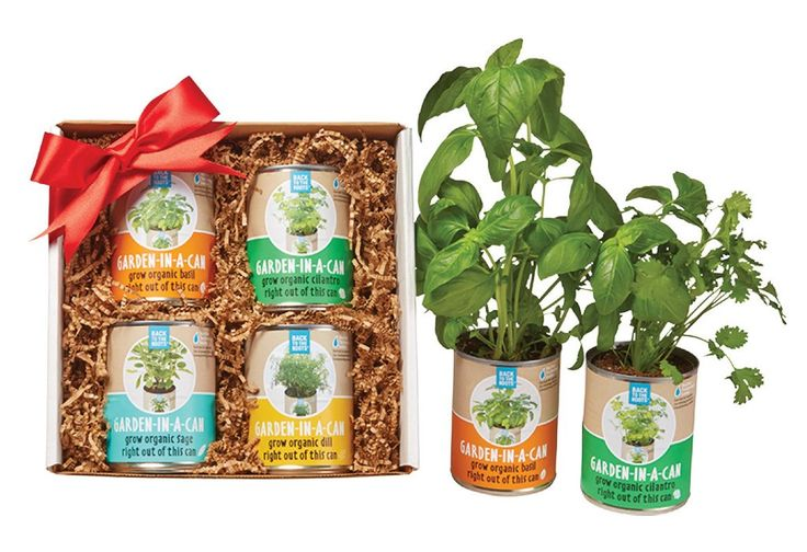 Garden-in-a-Can Set (4-pack)
