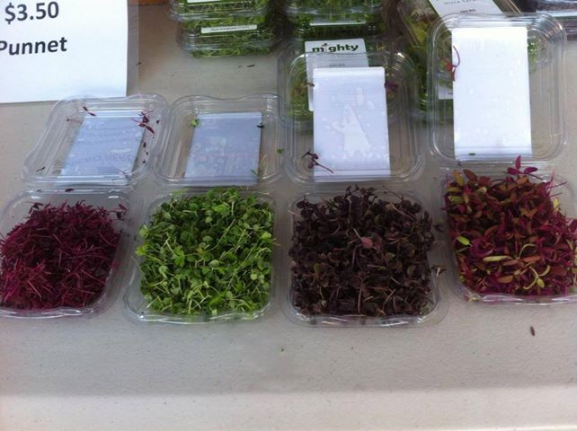 Coloured Microherbs from Supafresh