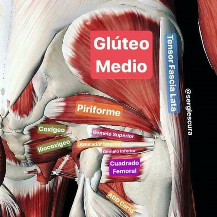 60 best Anatomia, Fisiología, Biología images on Pinterest ...
