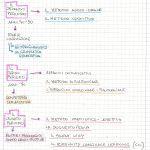 i+principali+metodi+glottodidattici