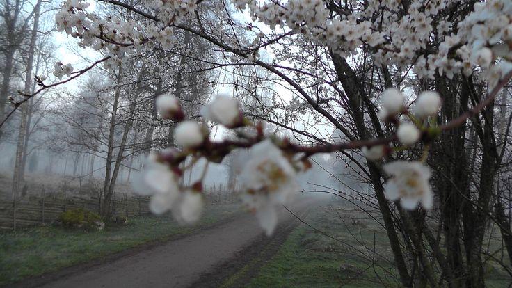 En vårmorgon i gästgivarhagen i Vimmerby