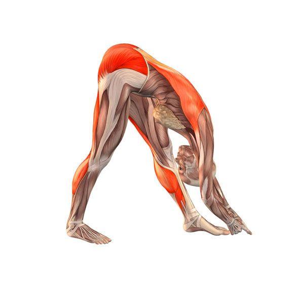 Intense left stretch pose - Parsvottanasana intense left - Yoga Poses   YOGA.com