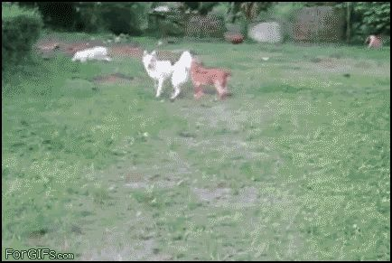 Dog fail. | 31 GIFs That Will Make You Laugh Every Time.