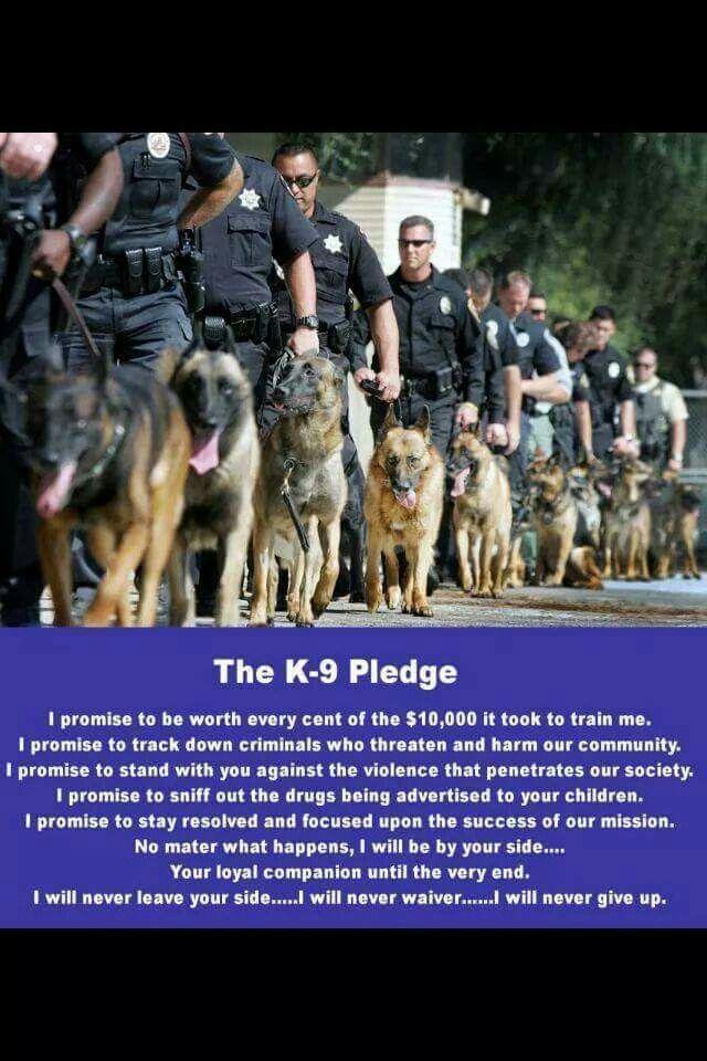 28 best Police K-9 humor images on Pinterest Police dogs, German - k9 officer sample resume
