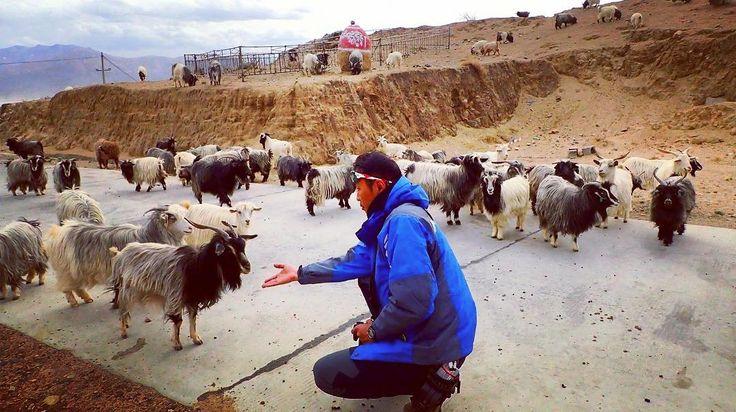 #nature#love#Travel#Traveling#Gopro#instagood#tbt#Backpacker#Backpacking#sightseeing#Landscape#Adventure#View#Travelgram#Vacation#Trip#holiday#cute#fun#me#photographer#igtravel #Bike#MTB#ocean#Hongkong#hkig#fun#happy#tibet#goat