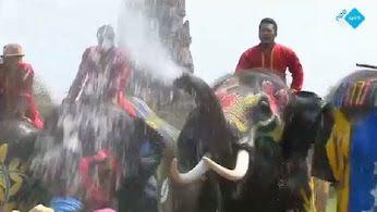Watergevecht met olifanten tijdens het boeddhistische Songkran-festival! http://www.spirit24.nl/#!player/share/program:53976471/group:37200368