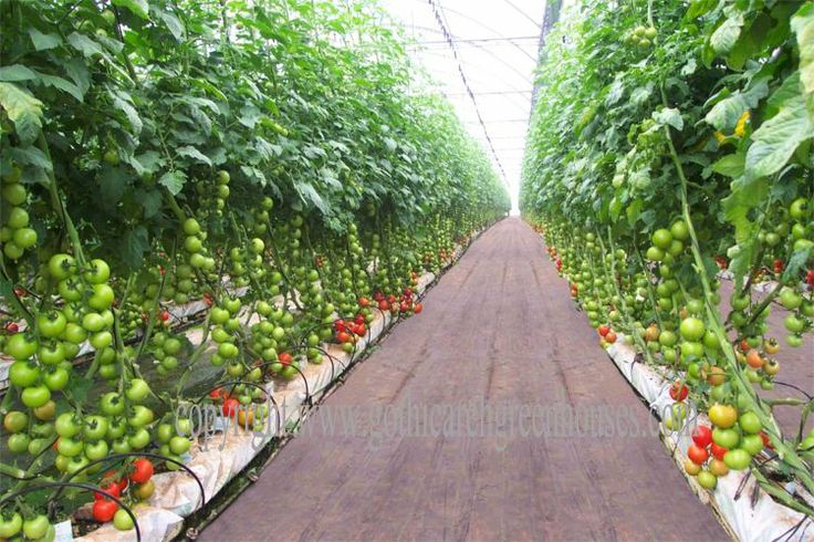 commercial greenhouse | ... main page hobby greenhouses commercial greenhouses school greenhouses