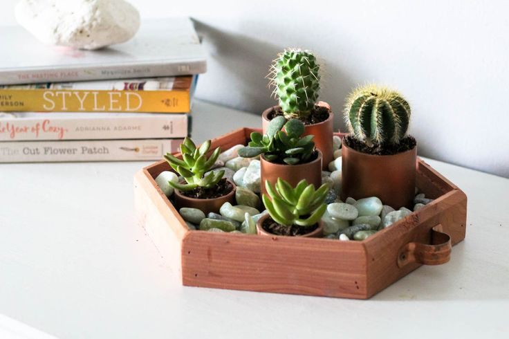 Using home improvement and garden items, you can create this gorgeous succulent garden centerpiece with the help of Orchard Supply Hardware.