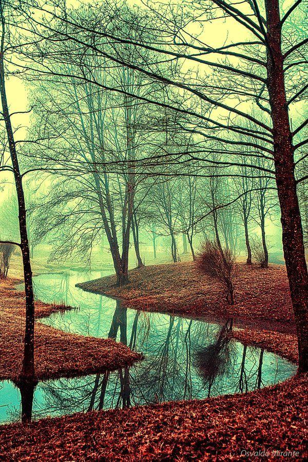 Rio na floresta no outono. Zurique, no cantão de Zurique, Suíça.  Fotografia: Osvaldo Mirante.