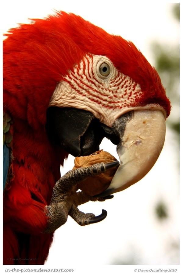 20 Beautiful Photographs Of Amazing Birds and Animals | Stuff Kit