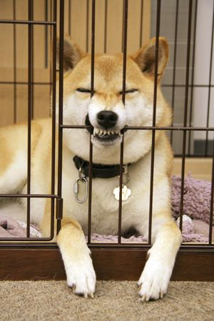 Let me out - Wants to get out? make your teeth stronger with right supplement, you will he out on your own.
