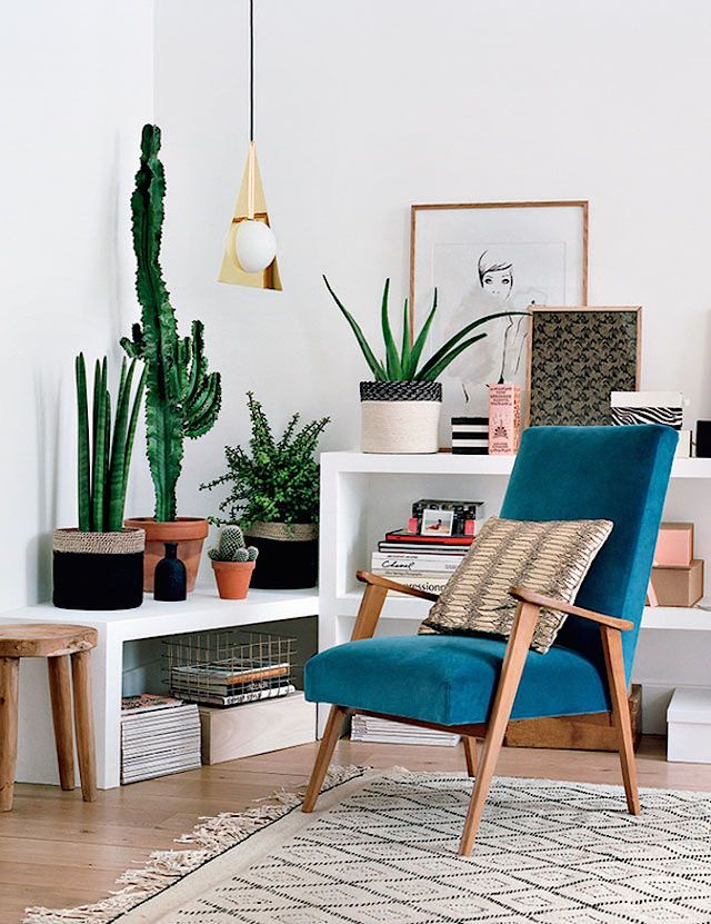 The perfect blend of modern and traditional in a Paris home with a blue vintage couch, hardwood floors and cacti