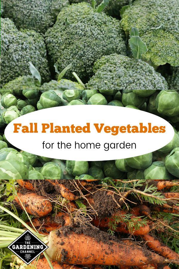 Fall Planted Vegetables For Your Garden Fall Garden Vegetables