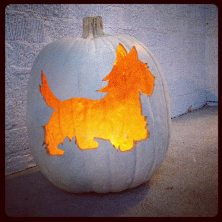 Best halloween pets costumes images on pinterest